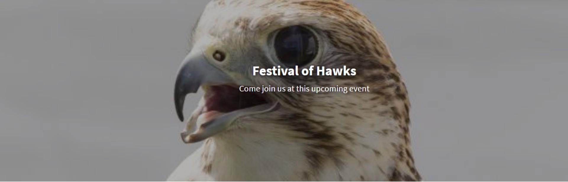 Festival of Hawks